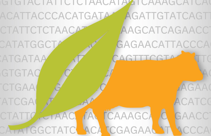Plant and Animal Genotyping