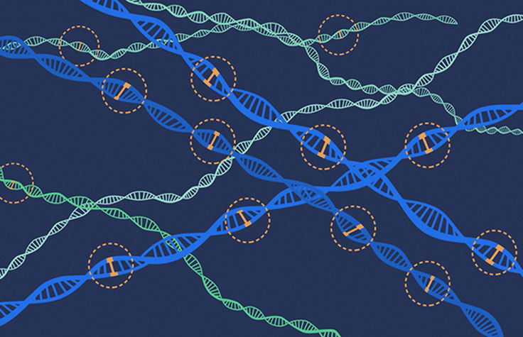 Polygenic Risk Scores Could Give Physicians New Tools for Diagnosis and Treatment