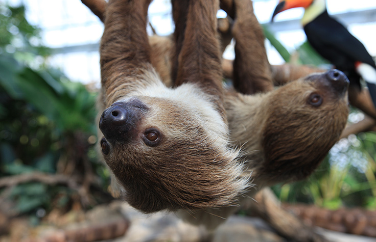 Investigating Tree Sloths with Mixed Amplicon Sequencing