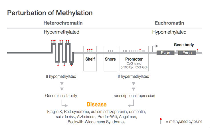 Perturbation of Methylation